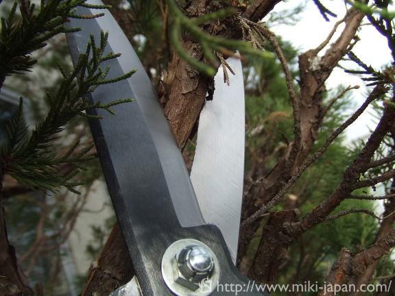 荒木用鋏 170mm