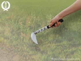 サビに強い鋸目付草刈小鎌