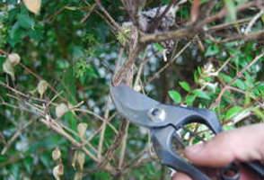 剪定鋏の正しい使い方